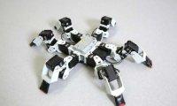 Исследователи научили шестиногого робота передвигаться быстрее и эффективней своих живых прототипов