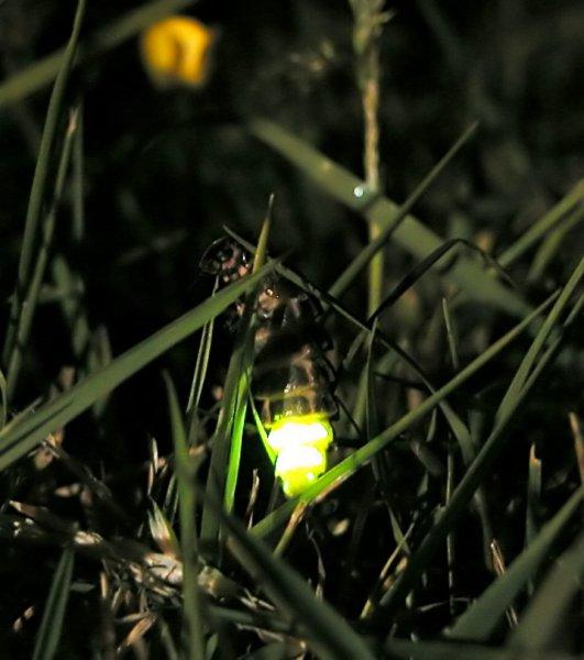 Ученым стало известно, как животные видят в темноте