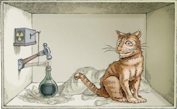 Российские ученые умудрились откормить котов Шредингера