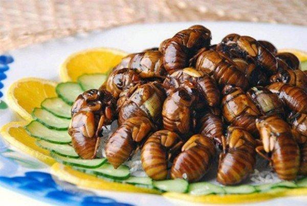 Для предотвращения глобального потепления ученые советуют переходить с мяса на насекомых