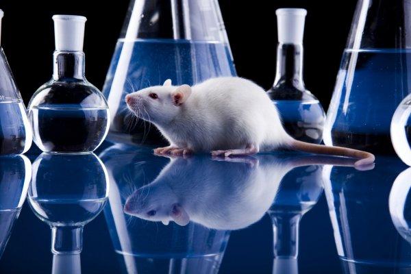 Ученым удалось вылечить диабет у мышей