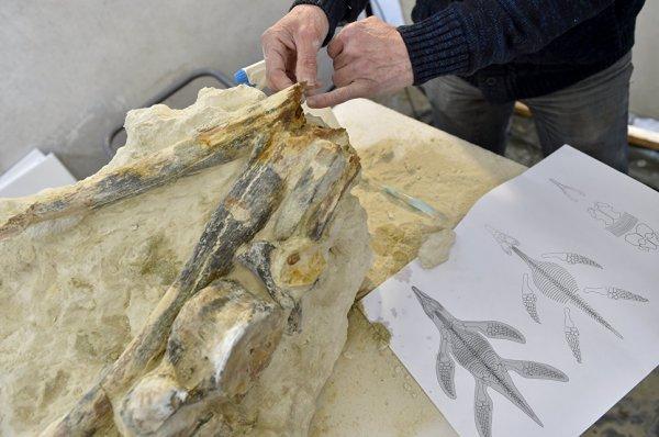 Французские палеонтологи нашли останки уникальной морской рептилии