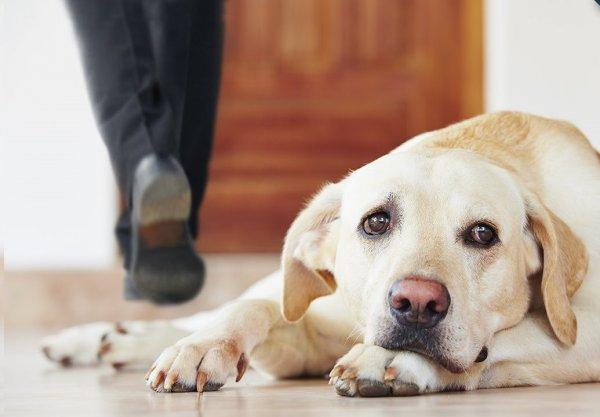 Ученые рассказали, что происходит с собакой в одиночестве