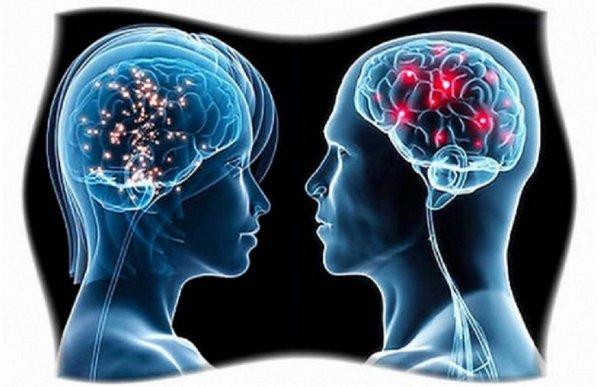 Мужской мозг больше женского – Ученые