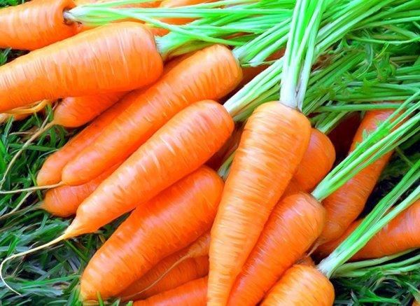 Морковь останавливает рост раковых клеток — Ученые
