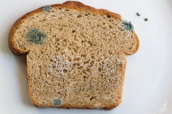 Ученые выяснили, как можно использовать заплесневелый хлеб