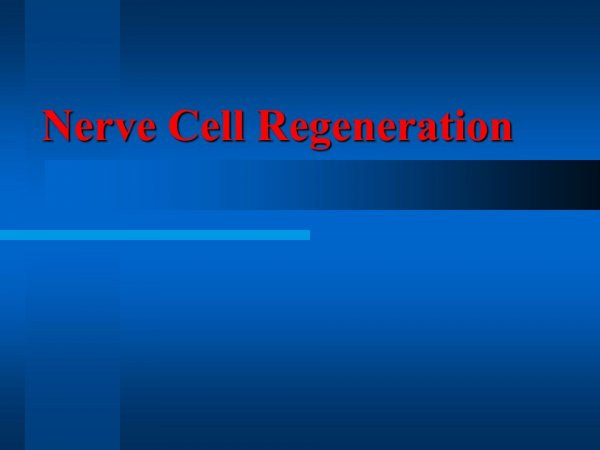 Ученые из Израиля доказали способность нервных клеток к восстановлению