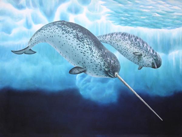 Ученые запечатлели на видео охоту редкого «морского единорога»