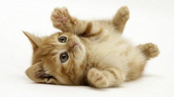 Как коты демонстрируют свою любовь