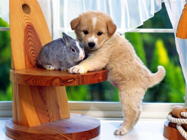 Ученые расшифровали особенности памяти собак