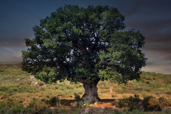 Ученые превратили кусок дерева в камень за несколько дней
