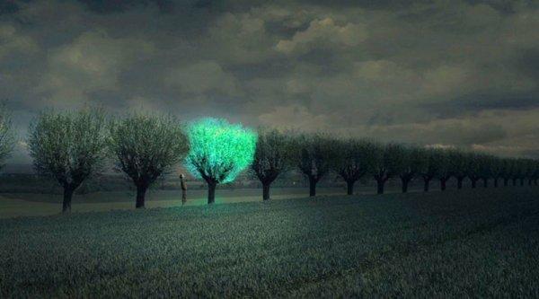 Китайские ученые создали светящиеся растения для замены фонарям