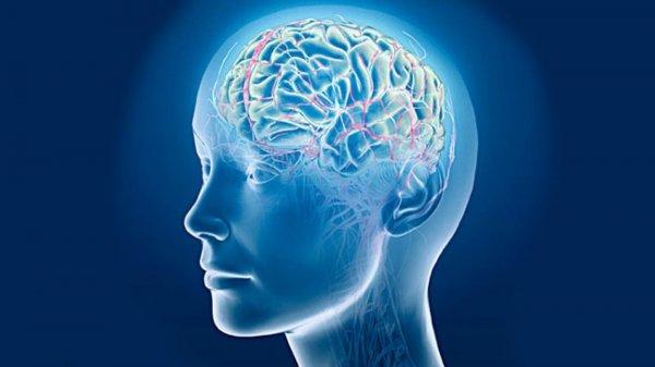Учёные нашли участок мозга, отвечающий за память