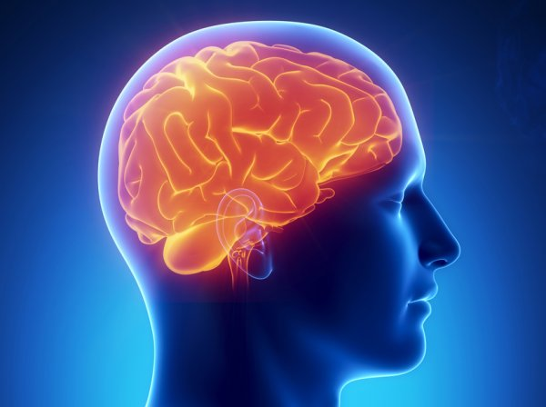 Ученые выяснили, как нейроны мозга помогают распознавать лица