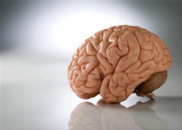 Ученые рассказали о планах вновь начать опыты по воскрешению мозга