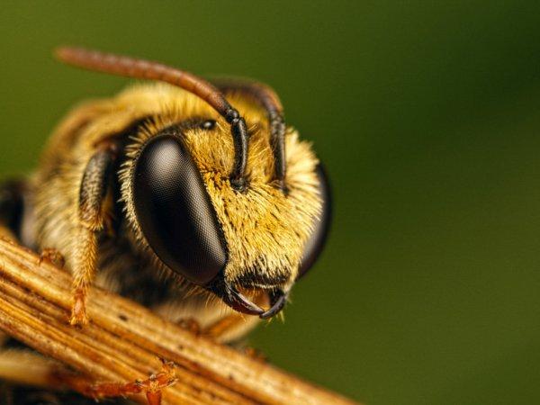 Ученые из Томска научились понимать язык пчел