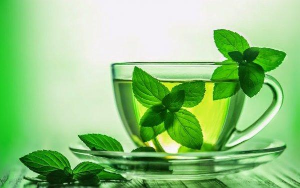 Мятный чай положительно влияет на память - Ученые