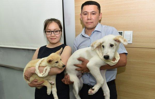 Южная Корея подарила РФ двух клонированных щенков якутской лайки