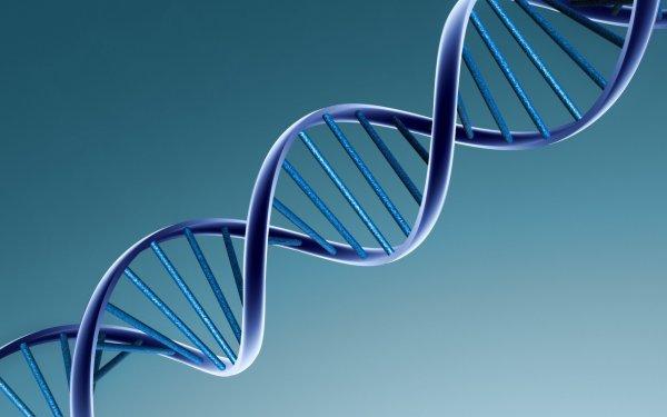 Ученые зафиксировали на камеру удвоение ДНК