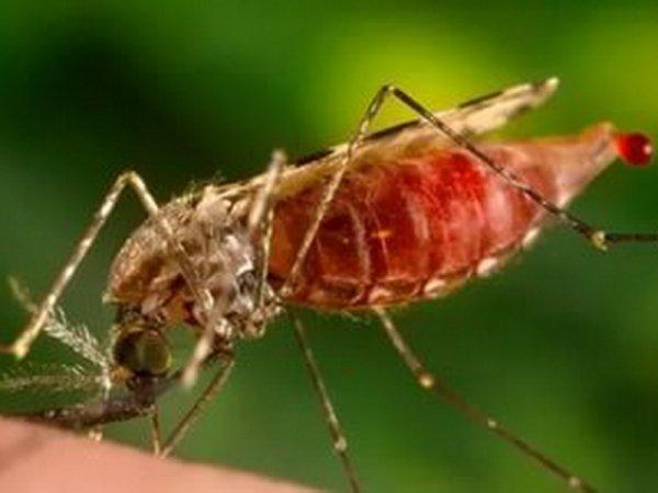 Ученые выяснили, что действие света подавляет желание кусаться у комаров