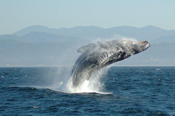 Популяции китов в будущем можно определить по их размеру – Ученые