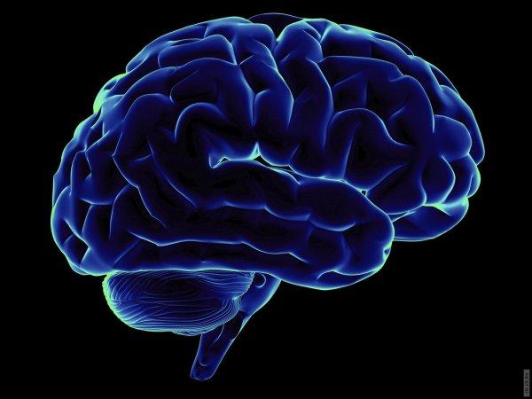Американские ученые смогли изменить активность мозга у животных