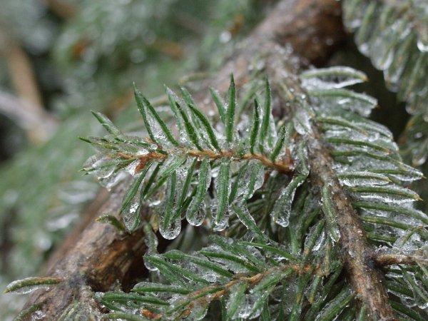 Ученые из России узнали, как растения спасаются от холода