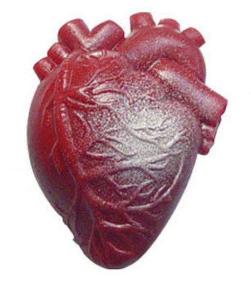 Ученые нашли метод регенерации сердечной мышцы