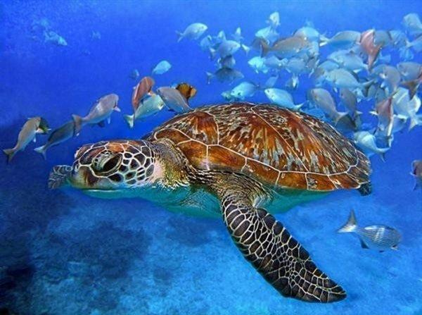 Ученые впервые смогли вырастить кожу морской черепахи