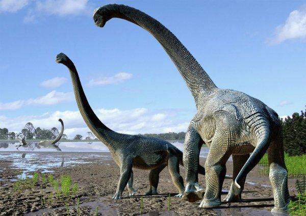 Ученые: Динозавров погубили растения и насекомые