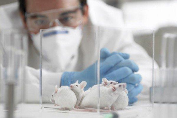 Ученые рассказали, как снизить риск возникновения рака прямой кишки