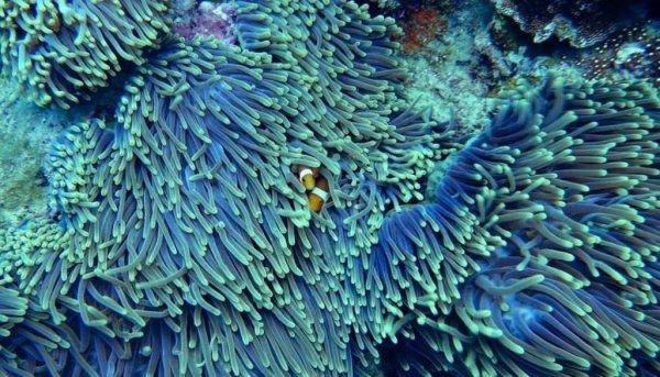 Ученые: Ради выживания глубоководные кораллы светятся в воде