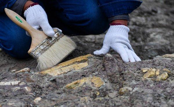 В Прикамье выявили останки древнего слона