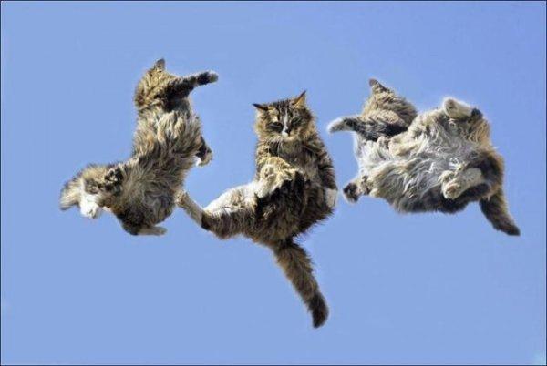 Ученые рассказали, почему кошки всегда падают на четыре лапы