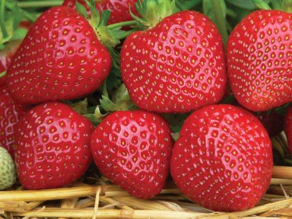 Ученые назвали опасные для здоровья фрукты и овощи