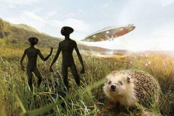 Круги на полях Липецкой области: Пришельцы снова идут на контакт?