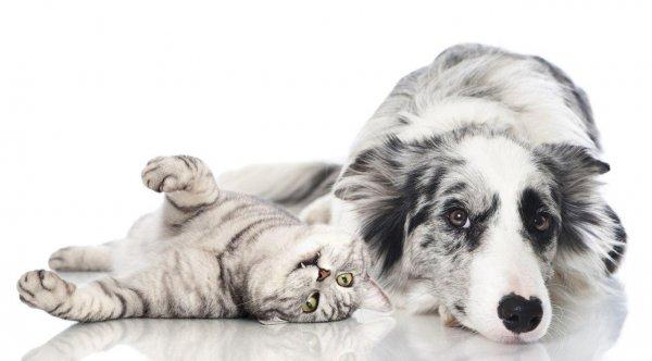 Ученые Лос-Анджелеса оценили степень влияния кошек и собак на окружающую среду