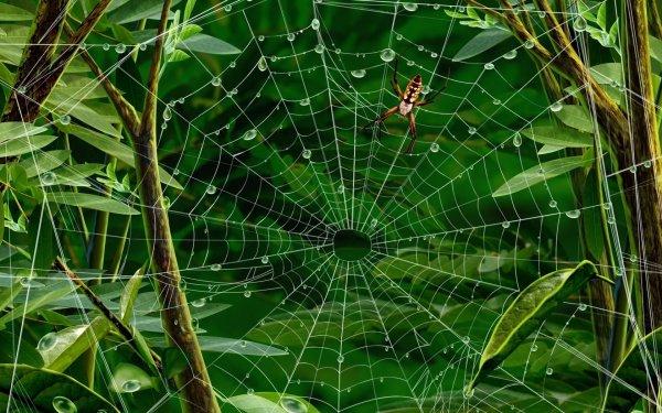 Ученые рассказали о пауке, который пересек Индийский океан