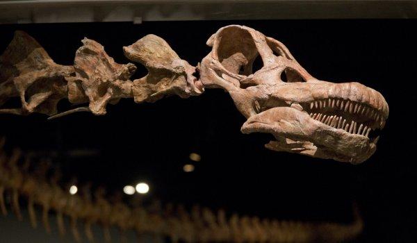 В Аргентине раскопали останки гигантского динозавра