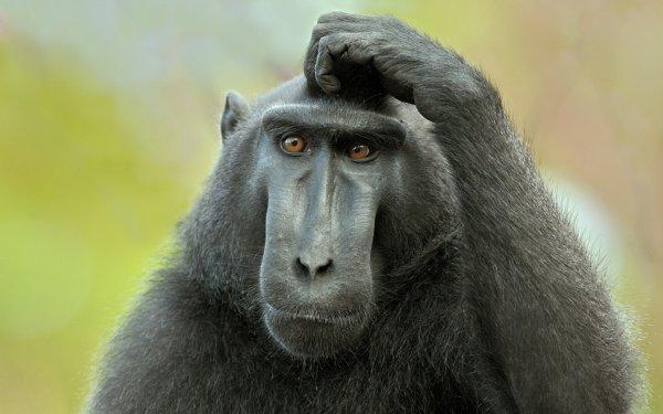 Ученые создали модель черепа прародителя обезьян и человека