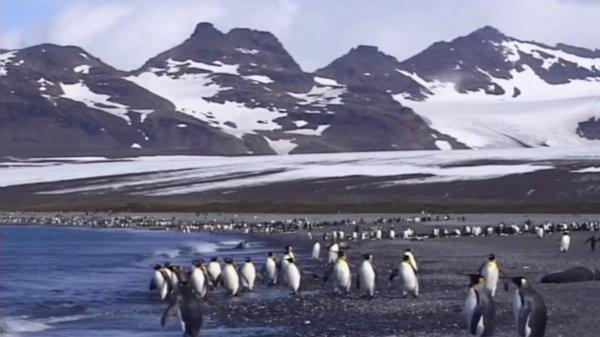 В Антарктиде из-за глобального потепления появились новые комары