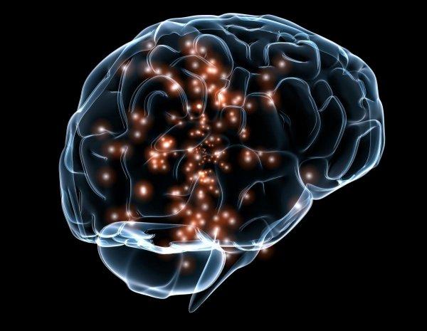 Учёные: Мозг взрослого человека производит клетки в ранее не исследуемых участках