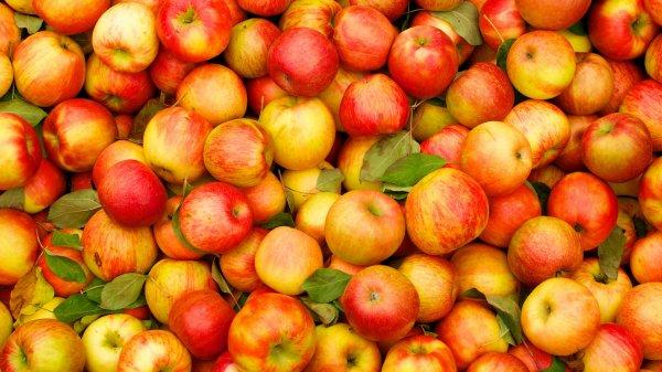 Ученые рассказали где появились самые первые в мире яблоки