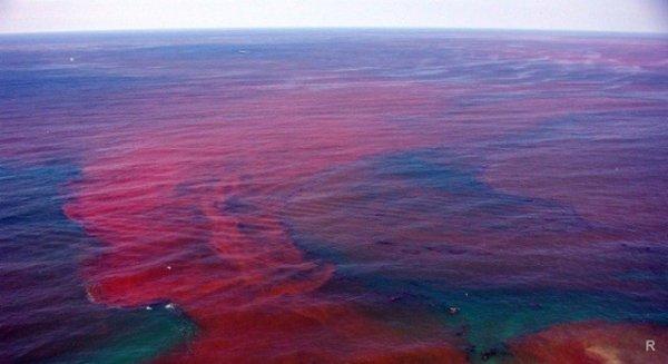 Российские ученые: «Кровавые дожди» не грозят человечеству