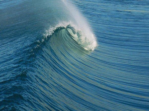Российские океанологи определят, как сильно навредили японцы Тихому океану