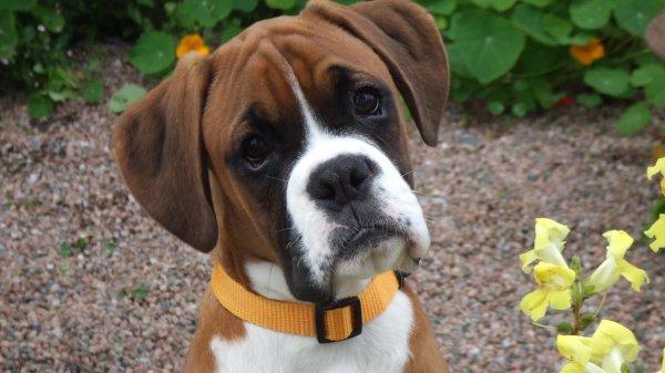 В Японии учёные научились лечить рак у собак