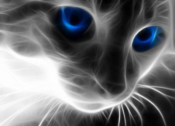 Ученые открыли у кошек одновременно пять личностей