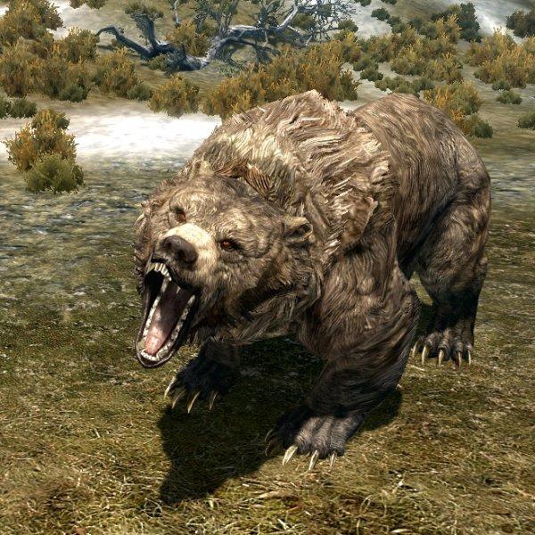 В Коми нашли кладбище древних пещерных медведей