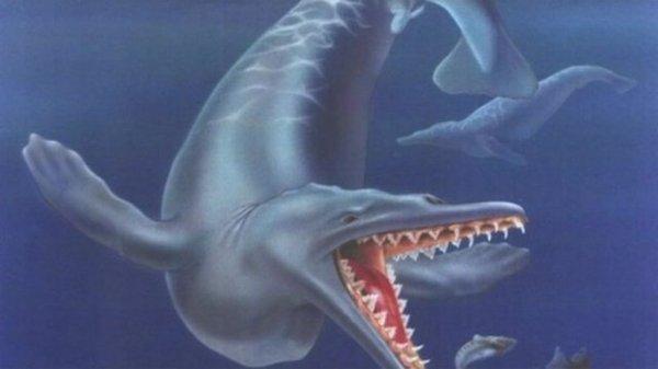 Ученые доказали, что древние киты были острозубыми хищниками