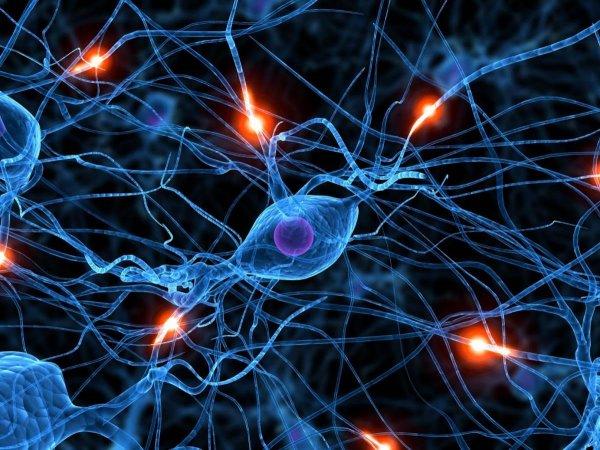 Финские ученые обнаружили новый способ улучшения работы головного мозга
